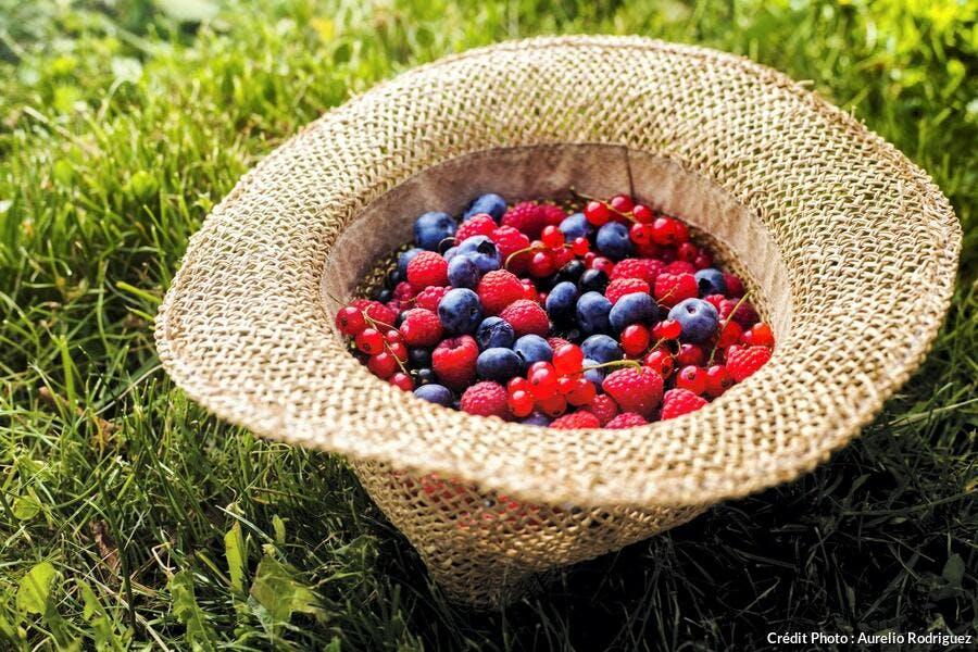 R79-reportage-haute-loire-fruits-rouges_ar.jpg
