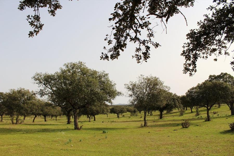 Zone d'élevage de cochon en Andalousie