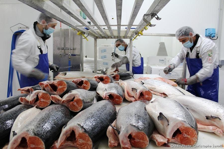 Fabrication du saumon fumé Petrossian