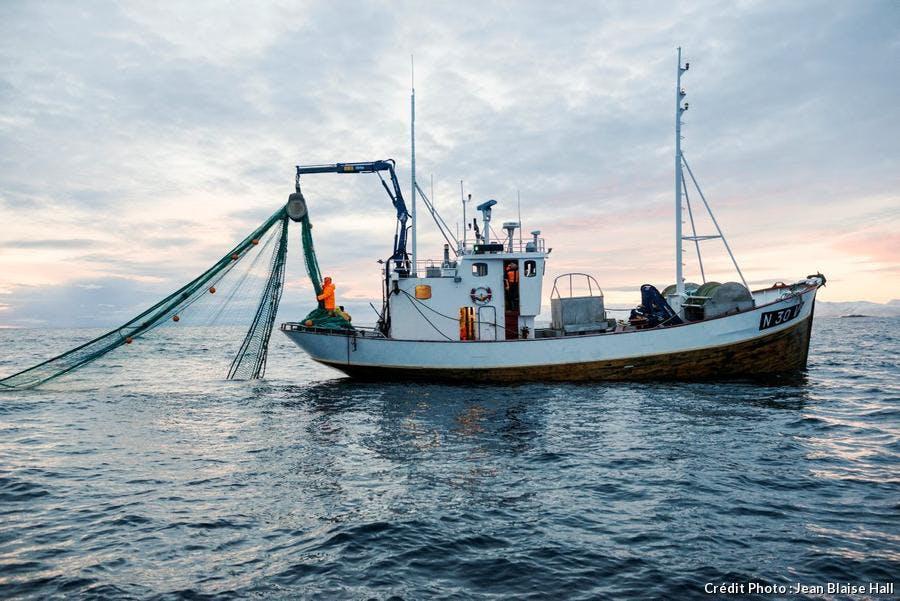 La pêche du skrei