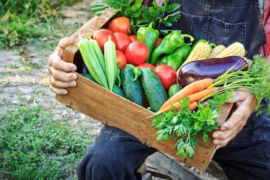 illust_legumes-bio-tomate-courgette-main-boite_is.jpg