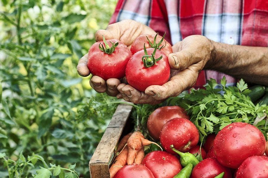illust-main-tomate-bio-nature_is.jpg