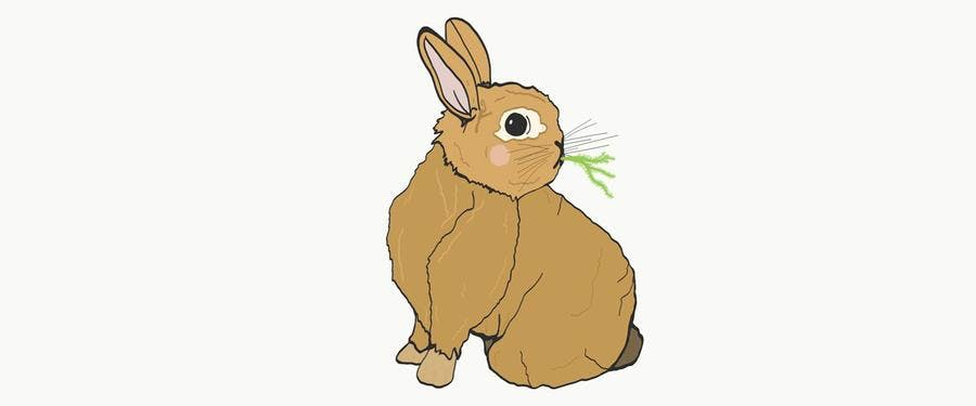 lapin-illustration-2_pg.jpg