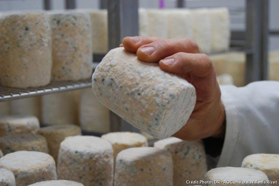charolais-fromage_dr-aoc-tania-rizet.jpg