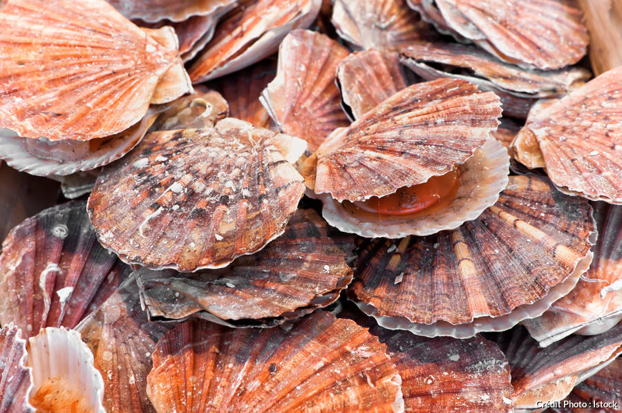 coquille-saint-jacques_istock.jpg