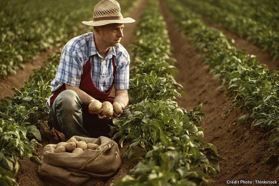 fermier-champ-pommes-de-terre_th.jpg