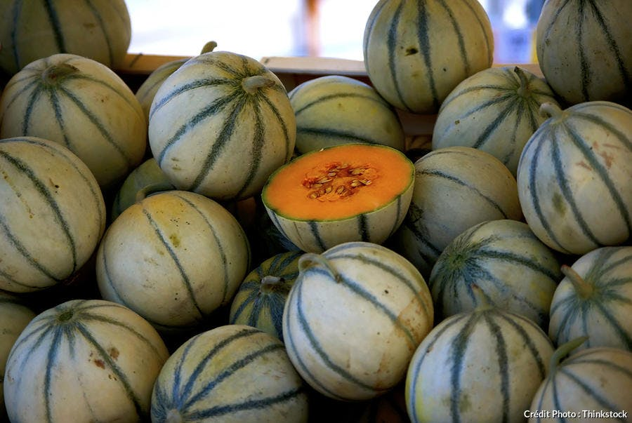 melon-th.jpg