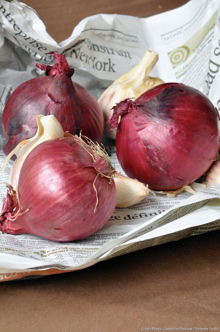 Oignon rouge cuisiner oignons rouges recettes oignons rouges r gal - Cuisiner des betteraves rouges ...