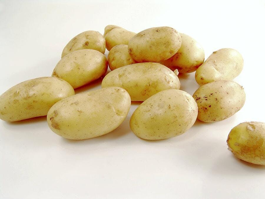 807fc49007d La pomme de terre Agata - Régal
