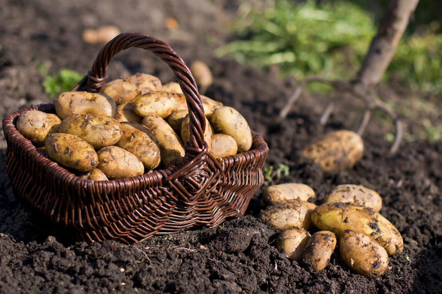 pomme-de-terre-patate-istock.jpg