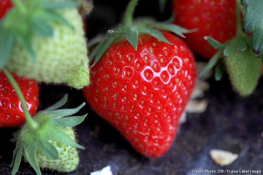 r-avn_fraise-charlotte_dr.jpg