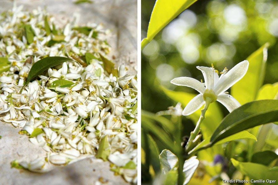 r-avn_r65-fleur-oranger-montage-fleurs_co.jpg