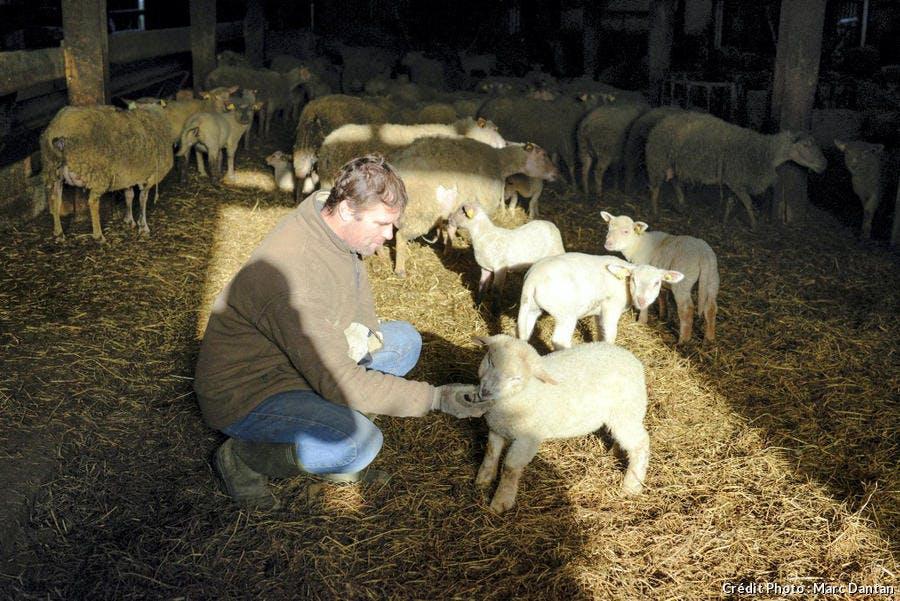r-avn_r70-belle-ile-agneau-yves-jouan_md.jpg