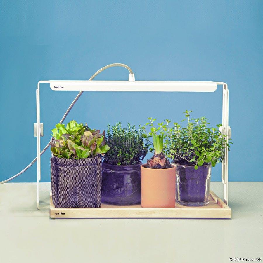 r-avn_r70-jardin-interieur-potager-eclaire_dr.jpg