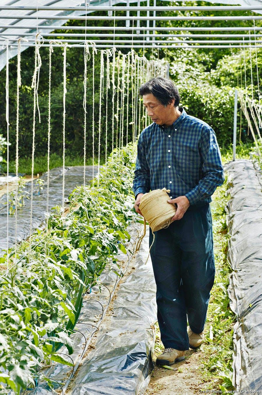 yamashita plants tomates