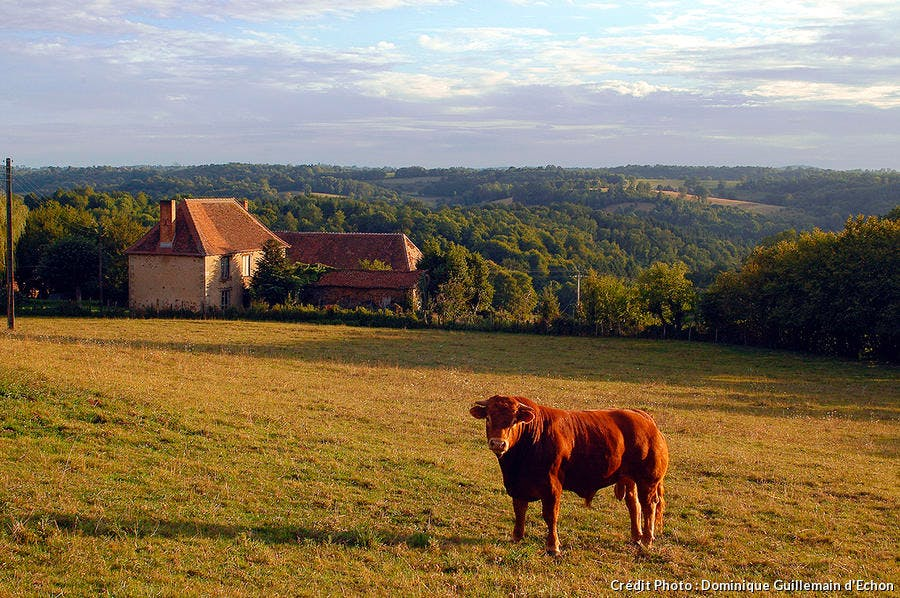 limousin paysage