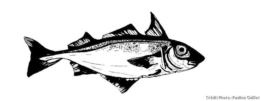 Un haddock