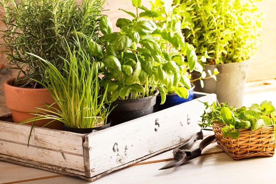 r78-herbes-aromatiques-pot-plantes_istock.jpg