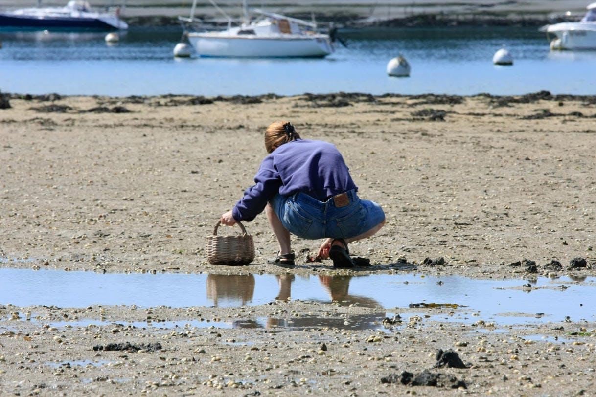 Ramasser des coquillages à marée basse