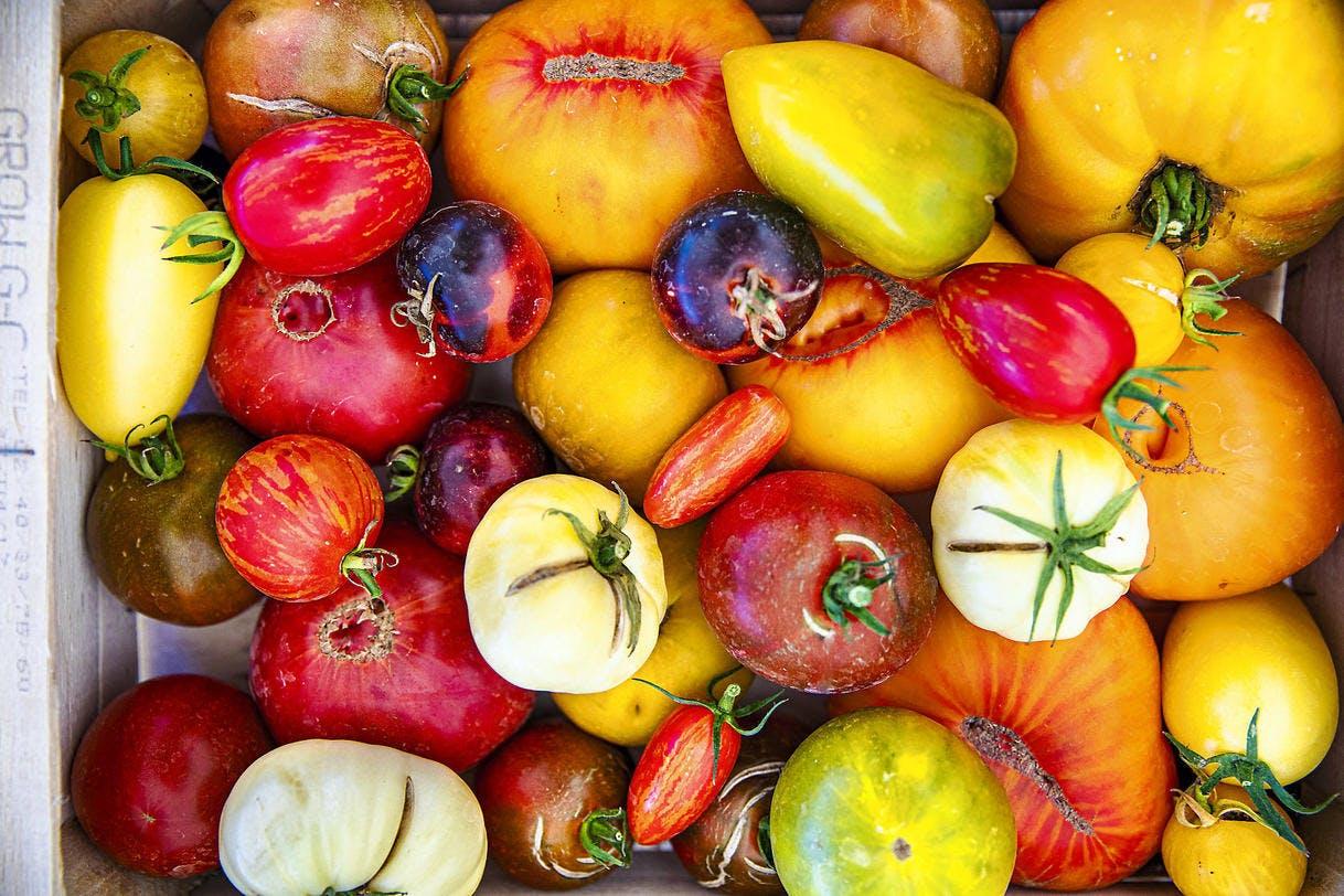 Tomates anciennes de toutes les couleurs