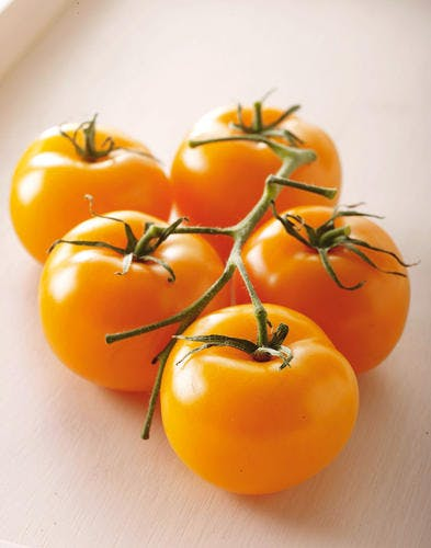 tomates orange