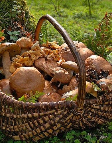Galette aux champignons et aux pousses d'épinards