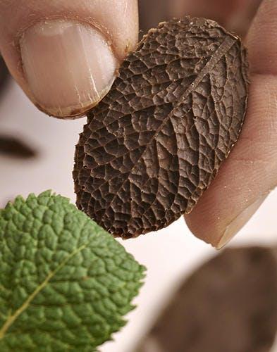 décoller feuilles en chocolat
