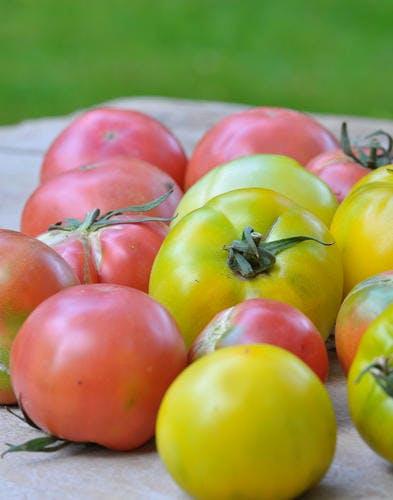 Velouté de tomates vertes à la vanille