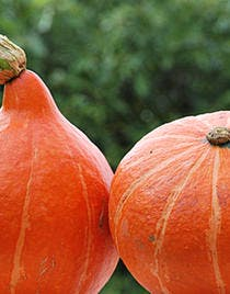 Velouté orange