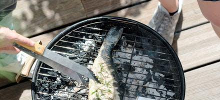 Bar grillé aux herbes