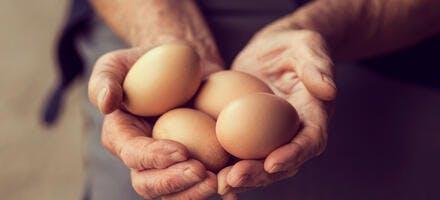 Recettes avec des œufs