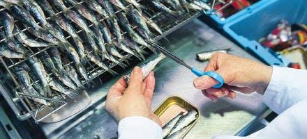 sardine parée