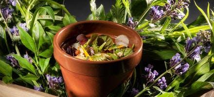 Entremet potager, salades et herbes de Monsieur Raillon, sauce crémeuse