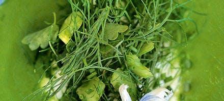 Velouté d'herbes amères, brousse de chèvre frais
