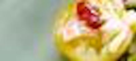 Reg_salade_de_riz_avocat_grenade_tomate