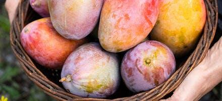 Panier de mangues
