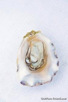 Huître bio Perle d'Opale