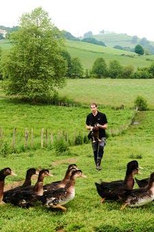 Élevage de canards - Pays Basque