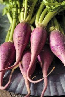 radis-violet_istock.jpg
