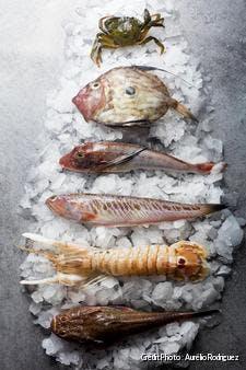 poissons pour la bouillabaisse